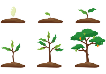 Mango Tree Growth - vector gratuit #399543