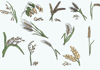 Vector Illustration Oats Collection - Free vector #399823