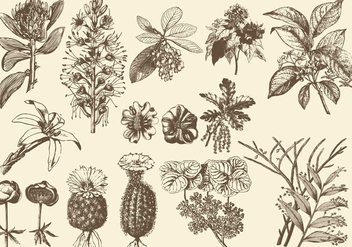 Sepia Exotic Flower Illustrations - vector gratuit #399893