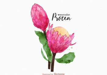Free Vector Watercolor Protea Flower - Free vector #401983