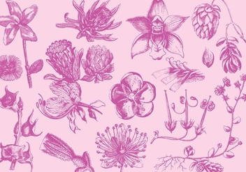 Pink Exotic Flower Illustrations - vector gratuit #402293