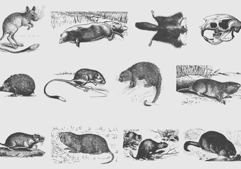 Gray Rodent Illustrations - бесплатный vector #402693