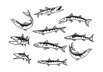 Free Barracuda Vector - Free vector #404033
