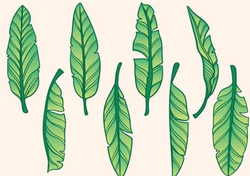 Free Hand Drawn Banana Tree Vector - Kostenloses vector #406053