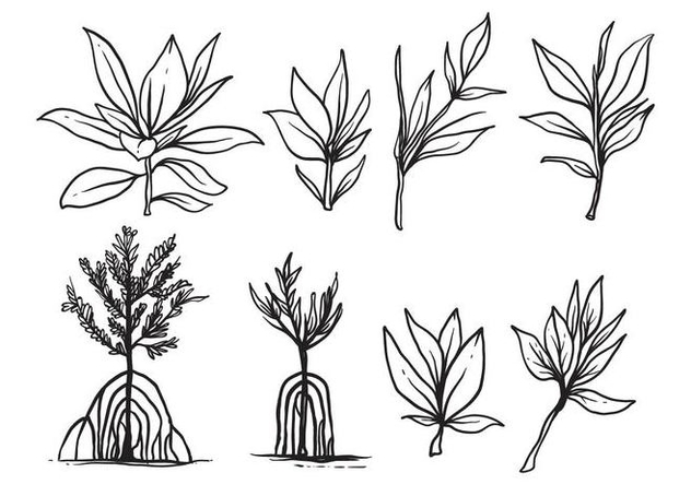 Free Hand Drawn Mangrove Vector - бесплатный vector #406713
