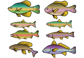 Rainbow Trout Fish Vector - Free vector #408583