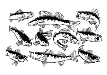 Free Walleye Vector - vector #408763 gratis