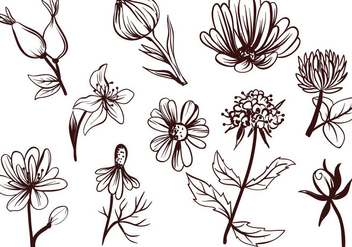 Free Tea Flowers Vectors - Free vector #409223