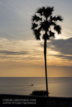 Sunset with fishing boats & palm. Phuket, cape Promthep - Free image #411353