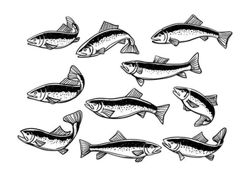 Free Rainbow Trout Vector - Free vector #412293