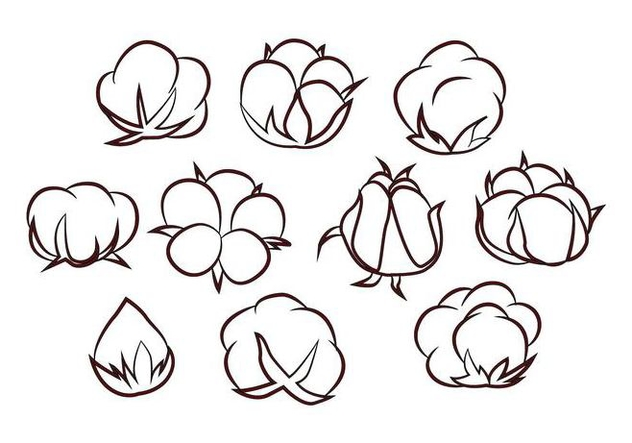 Free Cotton Flower Vector - Free vector #414953