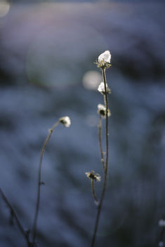 Sweet dreams - image #415073 gratis