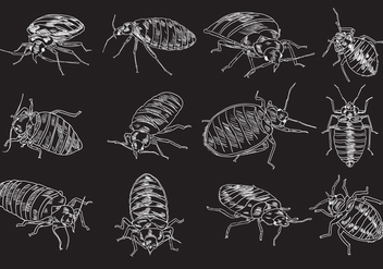 Bed Bug Illustration Set - vector #418713 gratis