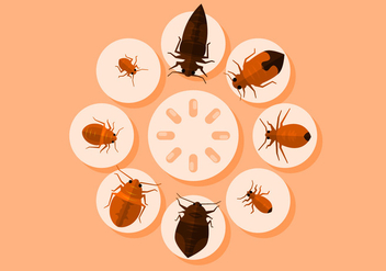 Bed Bugs Vector Illustration - бесплатный vector #418833
