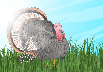 Wild Turkey Look For Something To Eat - vector gratuit #419803