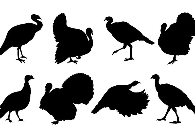 Free Wild Turkey Icons Vector - Free vector #420153