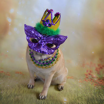 Bailey Puggins Is Ready For The Mardi Gras Party! - image #421603 gratis
