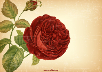 Vintage Rose Background - Free vector #422193