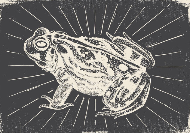 Vintage Frog Illustration - Free vector #422493