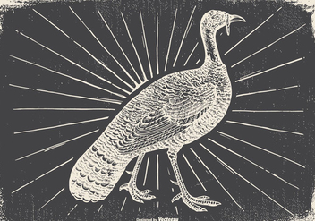 Vintage Wild Turkey Illustration - Free vector #422943