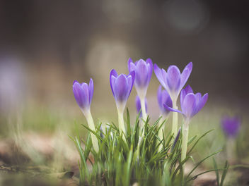 Spring is here for real now! - image gratuit #423403