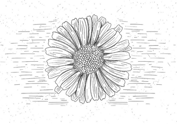 Free Vector Flower Illustration - бесплатный vector #423723