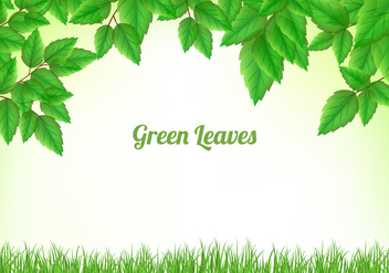 Green Leaves Background - Kostenloses vector #424323