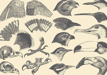 Bird Part Drawings - vector gratuit #425283