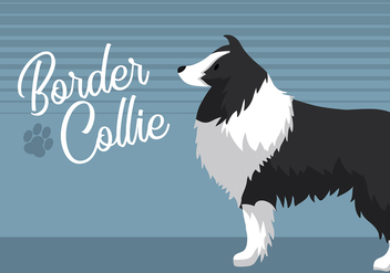Border Collie Free Vector - Kostenloses vector #426053