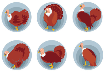 Wild turkey pose vector illustration - Free vector #426113
