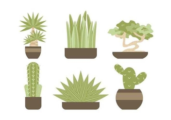 Free Evergreen Houseplant Vectors - vector gratuit #427073