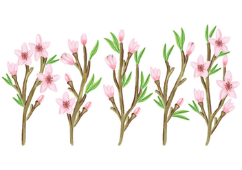 Vector Floral Branches Collection - vector gratuit #428493