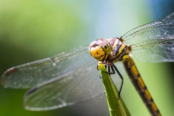 Dragonfly on green twig - image #428743 gratis