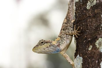 Lizard on tree trunk - image #428783 gratis