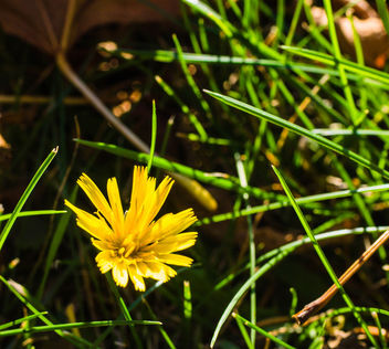 A flower in the grass - image #428953 gratis