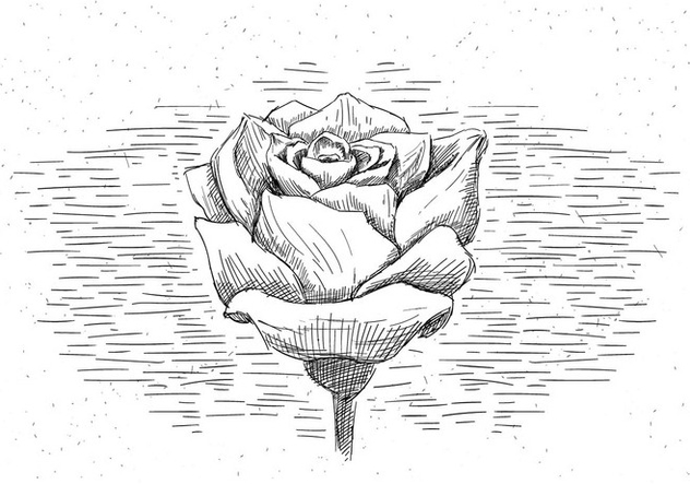 Free Hand Drawn Vector Rose - Kostenloses vector #429473