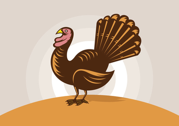 Wild turkey illustrations - Free vector #431733