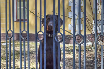 Behind bars - Free image #433313