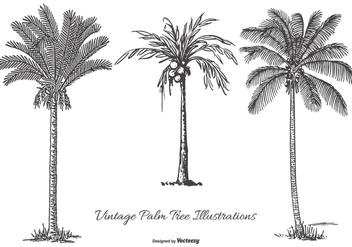 Vintage Palm Tree Illustrations - Free vector #434323