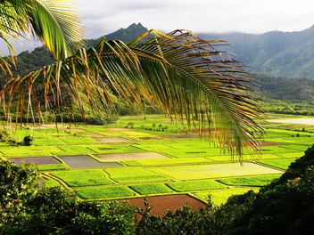 Green Fields of Kauai, Hawaii - image #434383 gratis