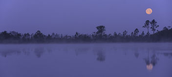 Moonset on a Foggy Morning - image #434553 gratis