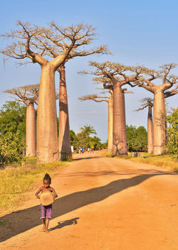 Small Girl and Baobabs - image #435653 gratis