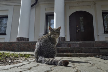 A cat who lives in the church - image gratuit #437543