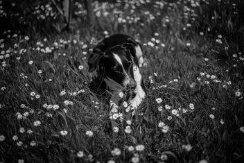 Dog's summer joy - image #437583 gratis