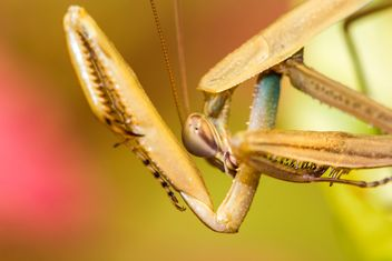 praying mantis - image #439053 gratis