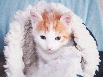 Kitten in soft hat - image gratuit #439283