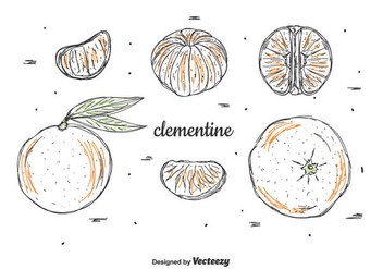 Hand Drawn Clementine Vector Set - Free vector #439353