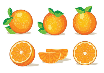 Set of Isolated Clementine Fruits on White Background - Free vector #439733