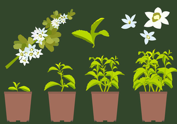 Stevia Plant Free Vector - Free vector #440043