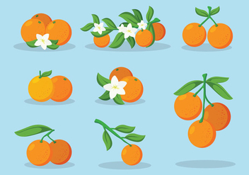 Clementine Fruit Vector - бесплатный vector #440743